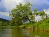 Grayling tree