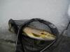 Good trout taken in March