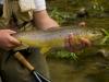 Good trout